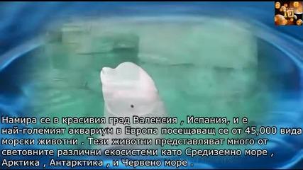 5-те най-красиви аквариума