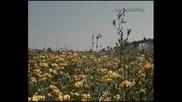 Близкая Болгария. 1977 г.