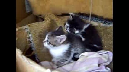 Бой На Сладките Котета - Продължението