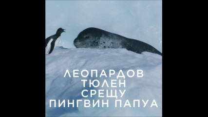 Леопардов тюлен срещу пингвин Папуа