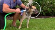 Специален уред за миене на кучета