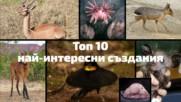 Топ 10 на най-странните създания на планетата