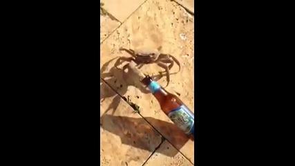 Морски рак невъзмутимо отмъква бирена бутилка от турист