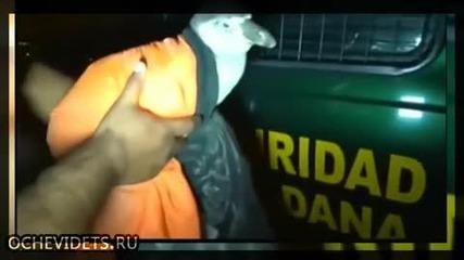 Полицаи в Перу в акция по залавянето на уплашен и дезориентирал се пингвин на улицата