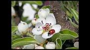 Сестри Аджови - Щом пролетта настъпи