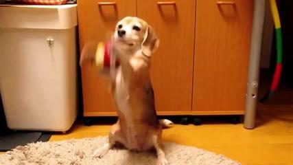 Кученце се учи да хваща топка с лапички