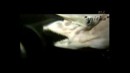 Страхотни Кадри На Японска Акула