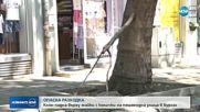 ОПАСНА РАЗХОДКА: Клон падна върху майки с колички в Бургас