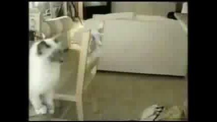 Най - смешните котки на света 1 част