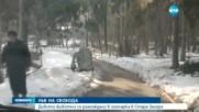 Лъв избяга от клетката си в зоопарка в Стара Загора
