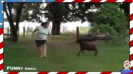 Бързи и яростни .. крави! - Смях