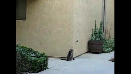Котка катерач