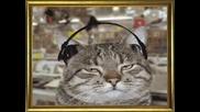 Смях - Луди Котки