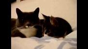 Котки Си Лафят