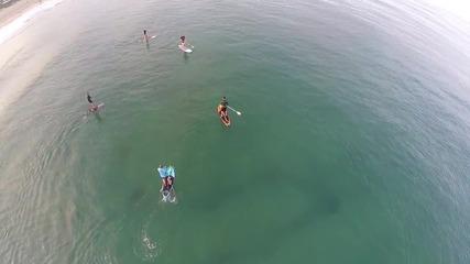 Сърфисти сърфират в близост до акули