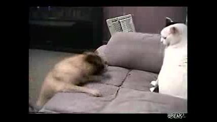 ku4e i kotka boi