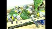 Над 200 папагала бяха спасени от контрабандисти на животни в Парагвай