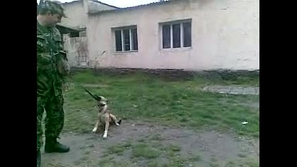 танцуващия с кучета 1