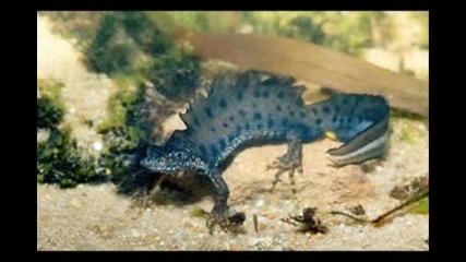 10 от най - странните животни на планетата...