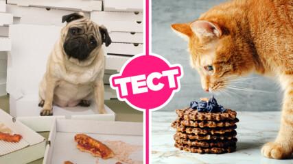 ТЕСТ: Избери си нещо апетитно за хапване и ще познаем дали си по-скоро котка или по-скоро куче