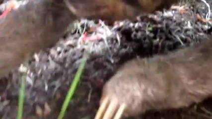Man Eating Sloths of the Caribbean - Youtubeight