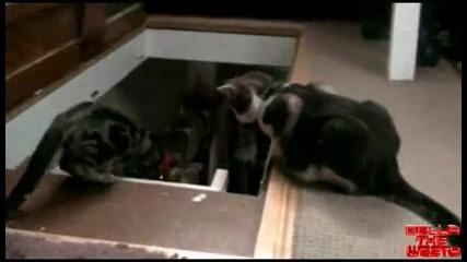 Котка хейтър