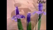 *m Фамилия Тоника - Очакване за пролет