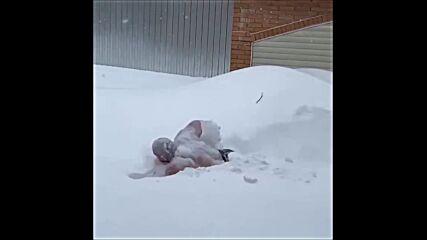Новоселов плува в снега