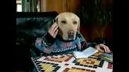 Смешно куче говори по телефона и маха на камерата :)