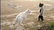 Кунг-фу котка и мечка
