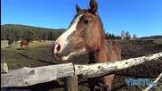 За конете, хората и други истории