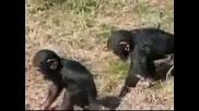 Бутни маймунката