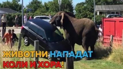Животни VS. хора & коли! :D