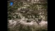 Българският филм Гори, гори, огънче (1994), Четвърта част [4]