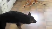 Куче немска овчарка се страхува от тигър плюшена играчка
