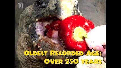 Топ 10 Най-дълго живеещи същества