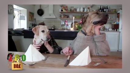 Бон апети на кучетата! И животните са хора!