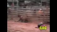 Компилация Смешно Видео 7