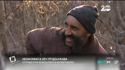 Безмилостна, нагла, явна и повсеместна сеч из българските гори