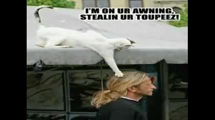 Забавни котки!