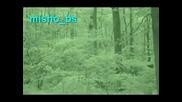 Камера засича извънземно в гората ! !