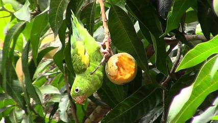 Джатака за папагала - Психотерапия с притчи
