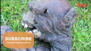 Alien-like Creature Discovered In South Africa- Mummified Baboon