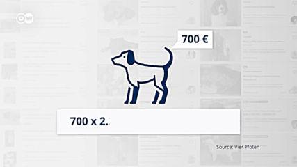 Кучешката мафия в Европа: бизнес за милиарди