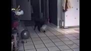 Компилация смешни котки
