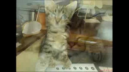Котенце - Сладки Котета