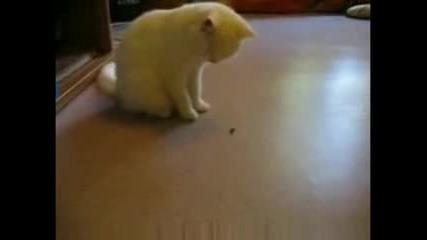 Котка играе с Муха (смях)