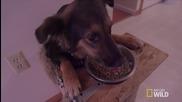 Животоспасяващ стол за куче