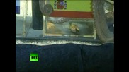 октопода посочи испания за шанпиони