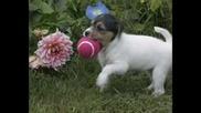 Искам Куче